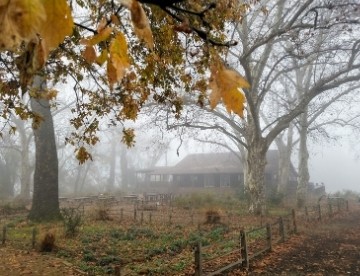 camp pollock in the fog through autumn maple leaves